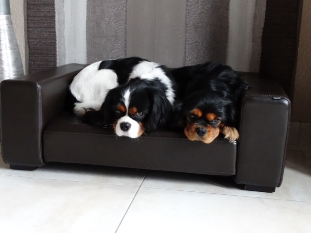canape cuir et animaux